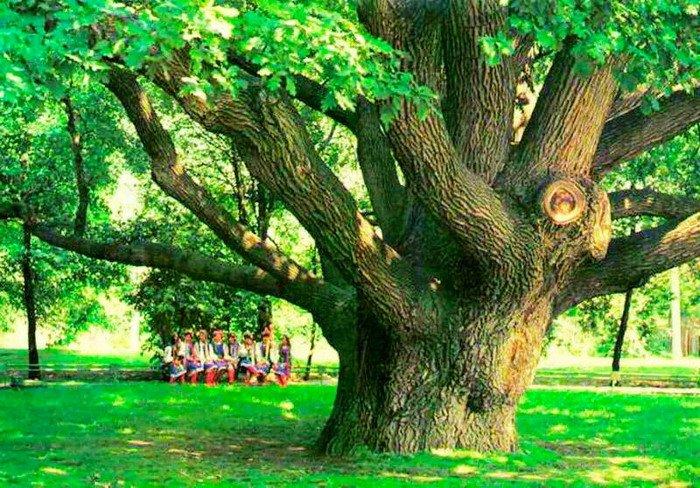 Запорозький дуб (старе фото)