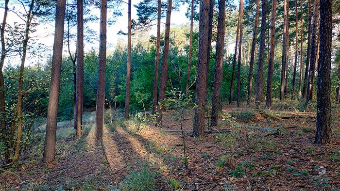Дивовижна місцевість броварського лісу