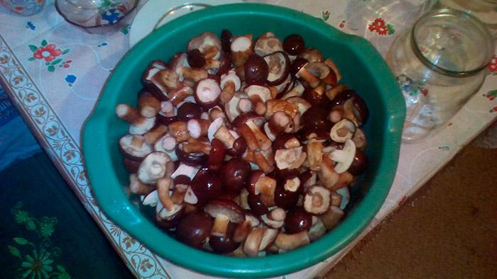 Польскі гриби готові до консервування