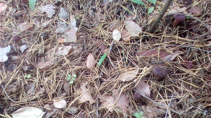 Скільки польских грибів на світлині?