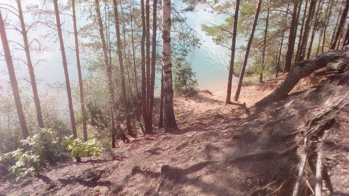 Довкола озера окрім сосни стоять стрункі берізки