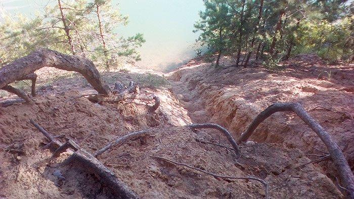 Природна краса коріння на березі озера