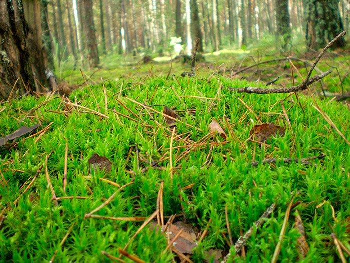 Тут грибів немає, але зелена ковдра шикарна
