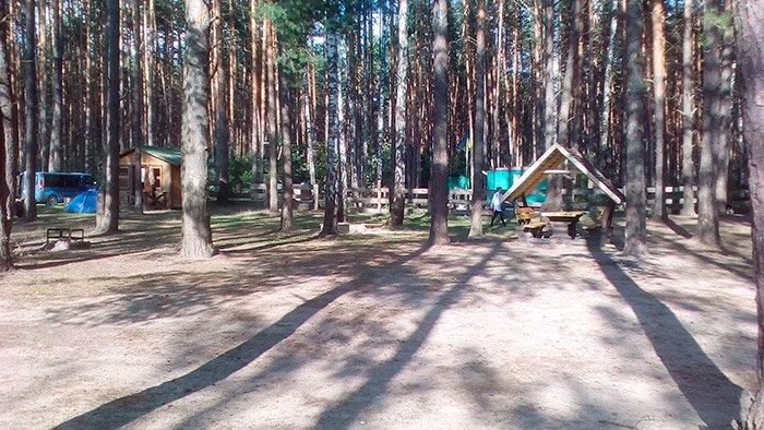 Затишні будівлі посеред лісу