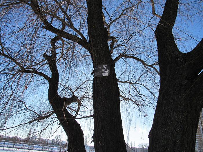 Табличка на дереві повідомляє про його значимість