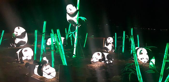 Кумедні панди розважаються