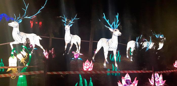 Величаві і насторожені олені