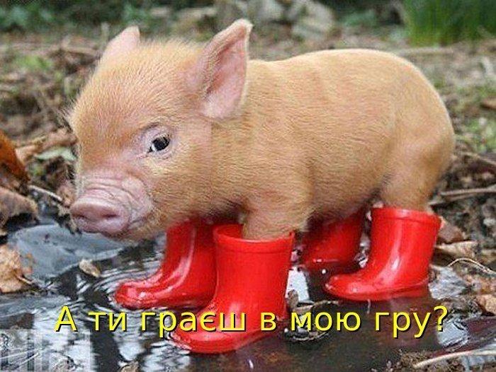 Агітація )))