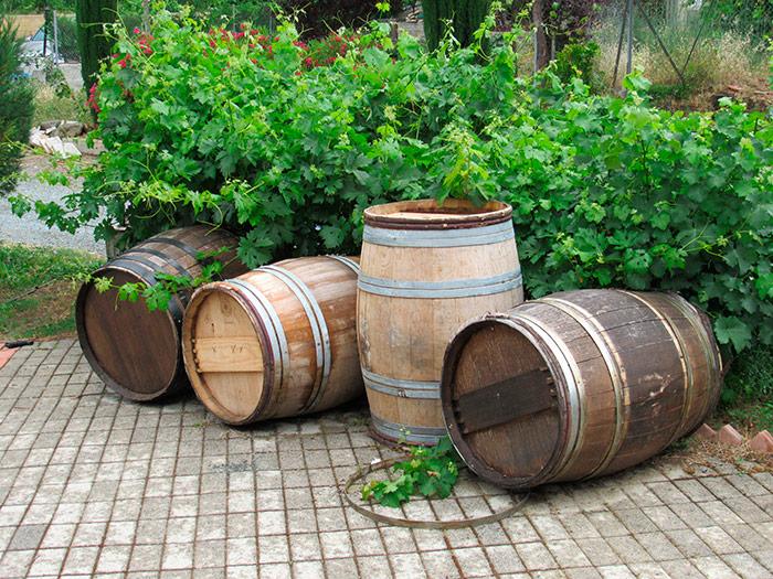 Біля входу до приватної виноробні Ламбурі