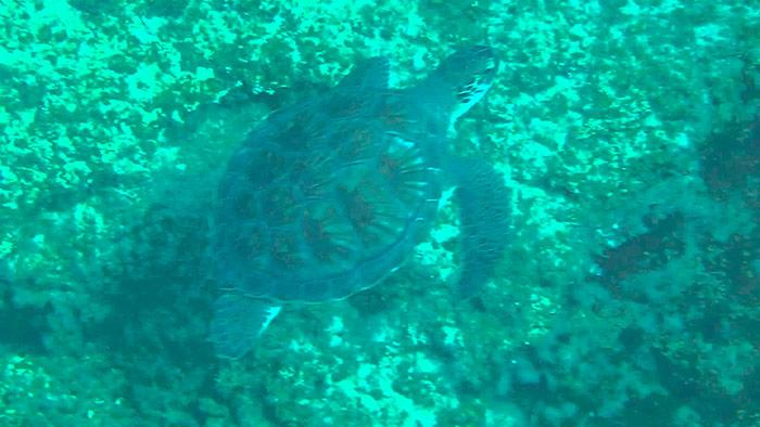 Несподівана зустріч з черепахою
