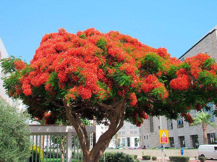 Неймовірне невідоме мені дерево на Кіпрі