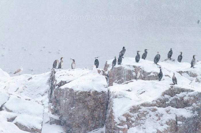 Пінгвіни на Дніпрі