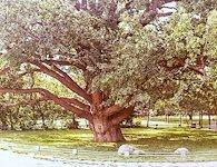 Запорозький дуб на Верхній Хортиці