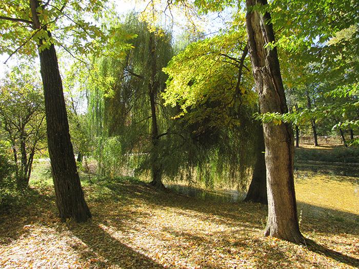 Дерева, що дають неїстівні горіхи