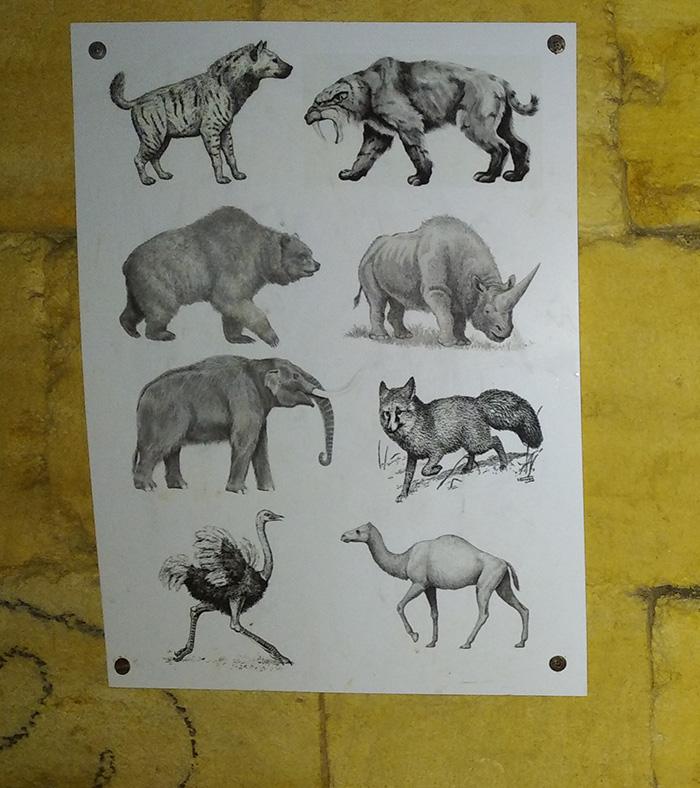 Деякі з тварин, кістки яких знайдено в катакомбах