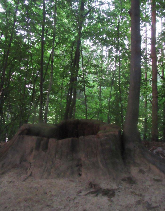 Дерева не відступають, вони вмирають стоячи!