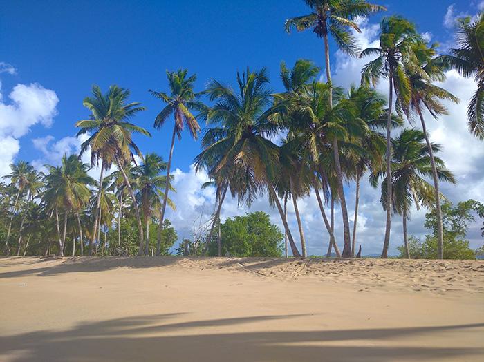 Чистий берег без людських слідів на піску