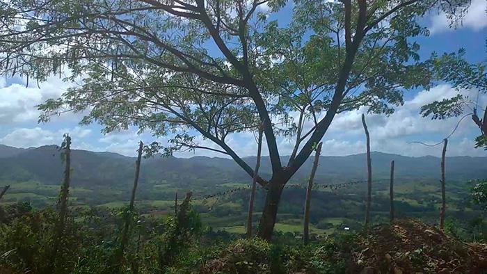 Домініканський паркан