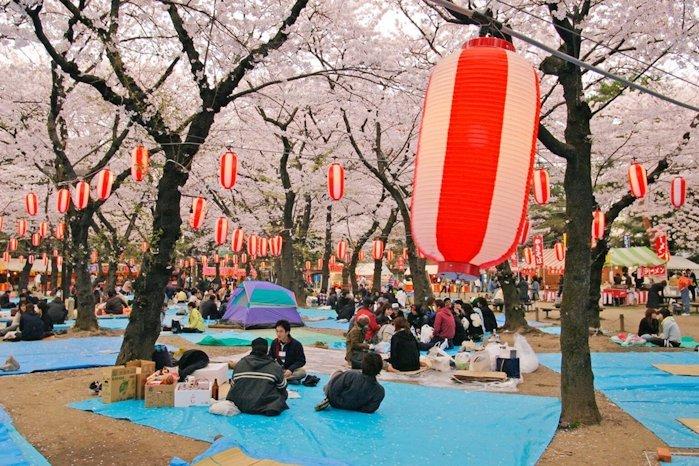 Ханамі в Японії